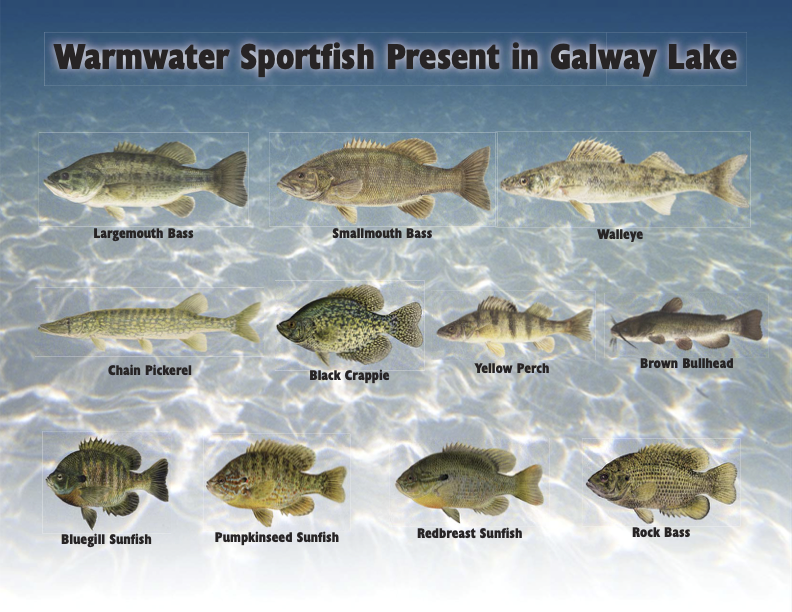 Fish Species in Galway Lake